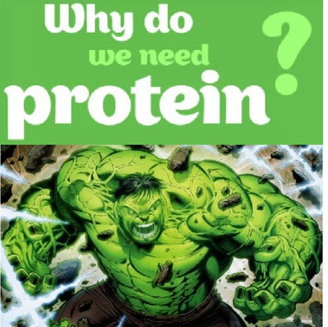 Why do we need proteins for Bodybuilding ? | ✪ FITNESS MAGAZINE ✪ | Scoop.it