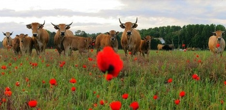 Réforme de la Pac : un puissant levier pour la relance agricole, sociale et économique de l'Europe | Nourrir la planète... autrement | Scoop.it