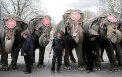 Animals Petition: Stop Big Top Animal Abuse | Change.org - Care2 News Network | Nature Animals humankind | Scoop.it