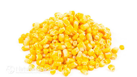 China Rejects Over 1 Million Pounds Of U.S. GM Corn As Unsafe - Natural News Blogs | Eating Healthy Living Well | Scoop.it