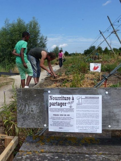 Agriculture urbaine : comment les jardins étudiants fleurissent aux abords des résidences universitaires | Innovation sociale | Scoop.it