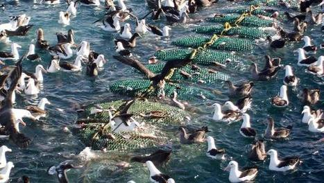 """Seabirds suffering massive population declines (""""70% drop since 1950s; marine ecosystems really bad"""") 