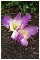 Look What's Blooming – September 20, 2012 « Edith J. Carrier ... | Fall Perennials | Scoop.it