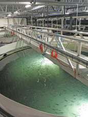 Veolia Water Solutions & Technologies | Aquaculture | Innovation | Scoop.it