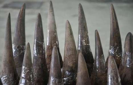 Vietnam arrests two over $1-million rhino horn haul | What's Happening to Africa's Rhino? | Scoop.it