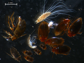 Ecosystems change long before species are lost | Biology | Scoop.it