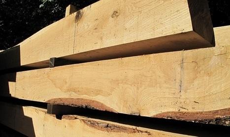 Actu bâtiment / rapport : Quel avenir pour la filière bois ? | Conseil construction de maison | Scoop.it