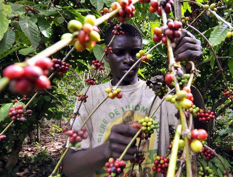 Côte d'Ivoire : «L'agro-industrie est notre fer de lance» | Questions de développement ... | Scoop.it
