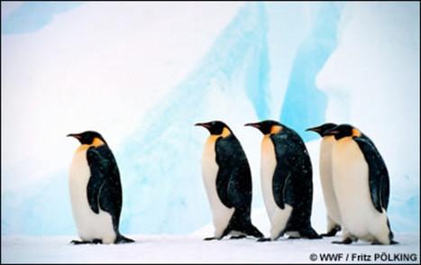 TV5MONDE- Les espèces en voie de disparition | protection de  la biodiversité | Scoop.it