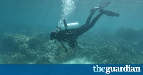 Sections of Great Barrier Reef suffering from 'complete ecosystem collapse'   Ecosystems at Risk   Scoop.it