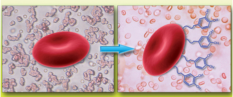 Immunocamouflage lets donor blood cells go undetected | Chemistry World | Blood Donation News | Scoop.it