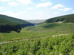 UK Forest Fund now one of the largest forest owners in the UK | Timberland Investment | Scoop.it