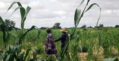 A Glimpse of CIF in Action in Rural Niger   Climate Investment Funds   Resilience   Scoop.it