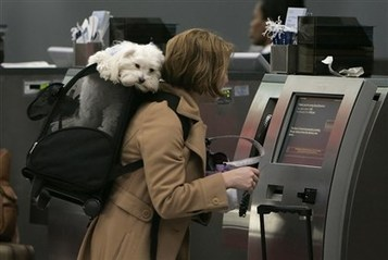 Beware of fees when traveling with animals | Travel tools | Scoop.it