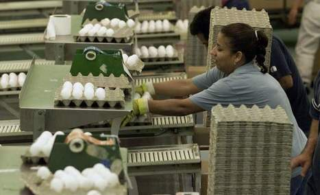 Egg recall splinters partnership marked by controversy | Food issues | Scoop.it