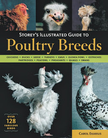 Poultry Supplies: Featured Book for Poultry Farming: Storey's Illustrated Guide to Poultry Breeds   Poultry Supply   Scoop.it