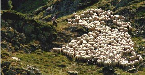 Les échanges entre les gens de la montagne et ceux de la plaine - Passion Provence | The Blog's Revue by OlivierSC | Scoop.it