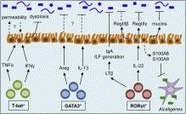ScienceDirect.com - Immunity - Innate Lymphoid Cell Interactions with Microbiota: Implications for Intestinal Health and Disease | Immunology for University Students | Scoop.it