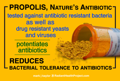 PROPOLIS - Nature's Antibiotic | Health from the Hive | Scoop.it
