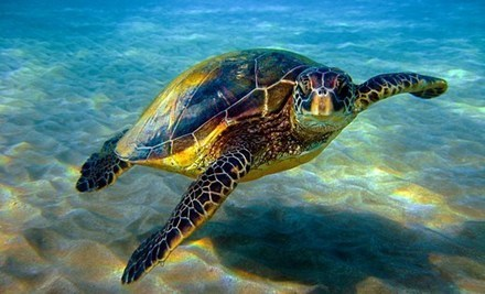 Sea Turtle Female Population Is Growing With Global Warming Trends - Guardian Liberty Voice | Home improvements | Scoop.it