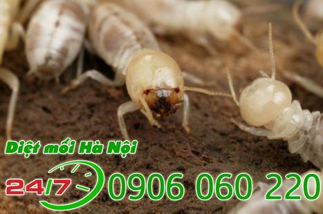 Diệt mối tận gốc tại Hà Nội giá rẻ uy tín chuyên nghiệp - Diet moi Ha Noi   Dịch  vụ diệt côn trùng   Scoop.it