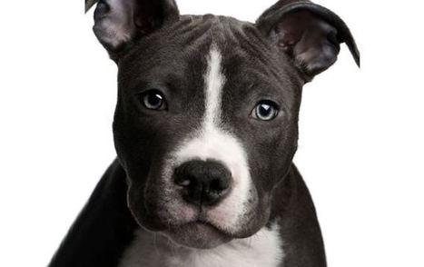 CPR for Doggies | #thingsilove @dealiciousitalian.com | Scoop.it