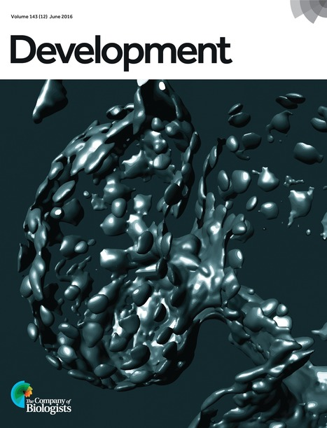 Phosphoinositide signaling in plant development | Emerging Research in Plant Cell Biology | Scoop.it