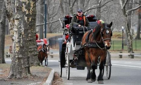 Jimmy Fallon backs Liam Neeson's campaign to stop Mayor de Blasio's horse carriage ban | GHPhorses | Scoop.it