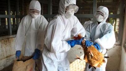 México: 4 millones de aves sacrificadas ante posible brote de gripe aviar | Inocuidad de alimentos | Scoop.it