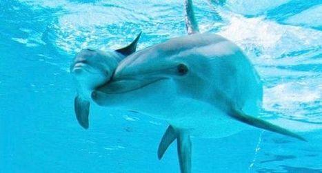A Taranto, gita nel golfo con mamma delfina | Travel Puglia | Scoop.it