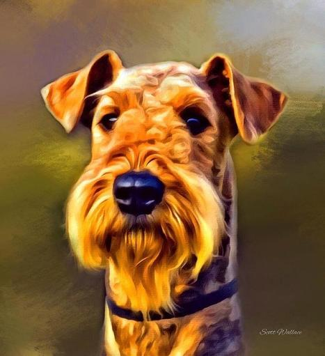 Pretty Painted Airedale | Airedale Terriers | Scoop.it