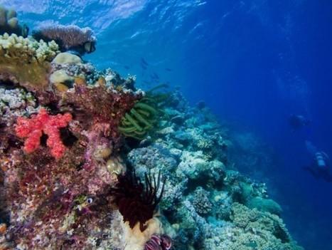 La dérive des continents a contribué à la biodiversité marine  | Biodiversité & Relations Homme - Nature - Environnement : Un Scoop.it du Muséum de Toulouse | Scoop.it