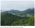 EDB - 1 % des espèces d'arbres stocke la moitié du carbone de l'Amazonie | Actualité des laboratoires du CNRS en Midi-Pyrénées | Scoop.it