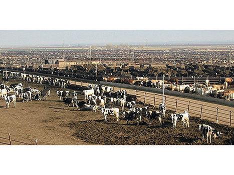 Des marchés de la viande très convoités - Paysan Breton | Filière élevage et viande | Scoop.it