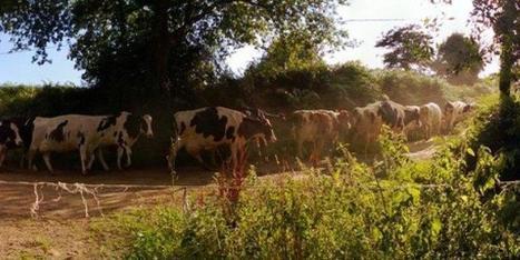 Sept questions pour comprendre lacriselaitière | Agriculture en Dordogne | Scoop.it