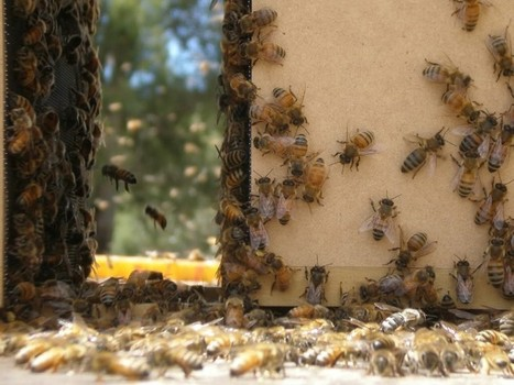 "WMEAC to screen ""Vanishing of the Bees"" at UICA 