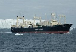 Australia's Top Attorney to Argue Japan Whaling Case - Environment News Service | The Australian government should oppose Japanese whaling in Antarctica. | Scoop.it