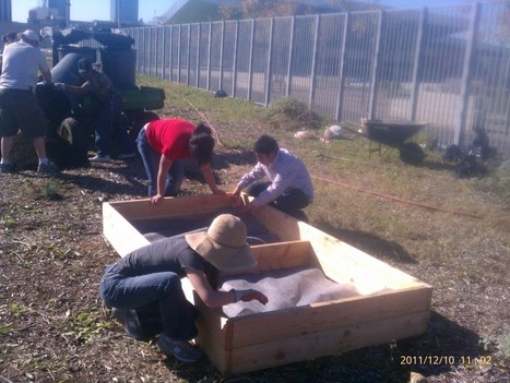 The new garden at Roybal High School | Enrich LA | Growing Food | Scoop.it