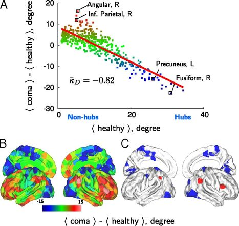 Hubs of brain functional networks are radically reorganized in comatose patients | Network science to explore the brain | Scoop.it
