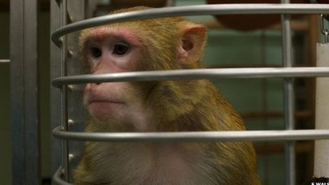 Meeting Oxford's research monkeys | MindBrainBody | Scoop.it