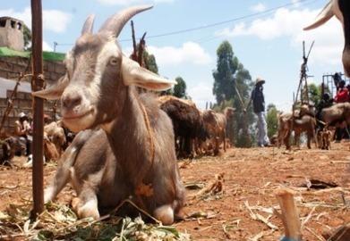 Barter trade may boost rural food security - experts - AlertNet   Barter News   Scoop.it
