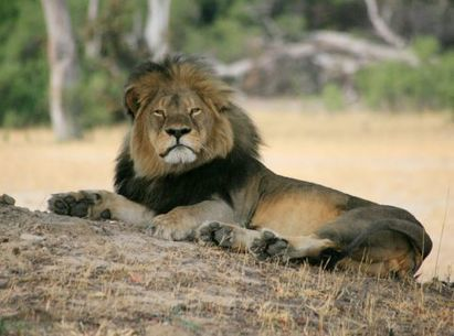 Sign the pledge to end trophy hunting! | Our Evolving Earth | Scoop.it