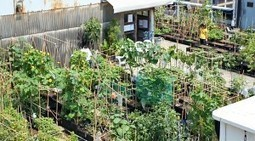 Urban Farming: A Tale of Two Rooftops - Organic Connections | Environmental Innovation | Scoop.it