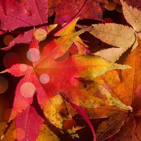 Autumn | Topical English Activities | Scoop.it