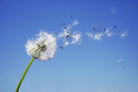 Promises to myself: ten philosophical resolutions   Ecosentido   Scoop.it
