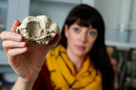 Dinosaurs copied the body, skull shapes of distant relatives | Conformable Contacts | Scoop.it