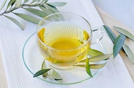 Infuso di foglie di ulivo: un antibiotico naturale usato fin dall'antichità | Rimedi Naturali | Scoop.it