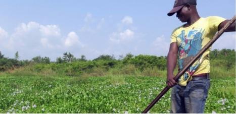 Comment le Bénin a transformé un fléau en ressource | Les colocs du jardin | Scoop.it