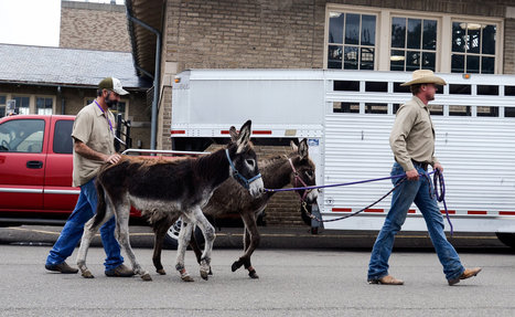 Where's the Love for Donkeys? | Cheval | Scoop.it