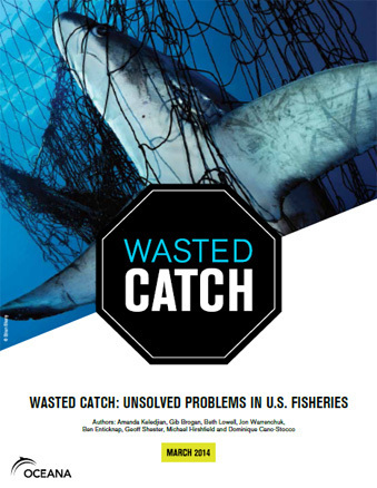DEADLY BYCATCH:  Two-thirds of healthy fish brought on to fishing vessels is thrown back into the sea -  dead or injured | OUR OCEANS NEED US | Scoop.it